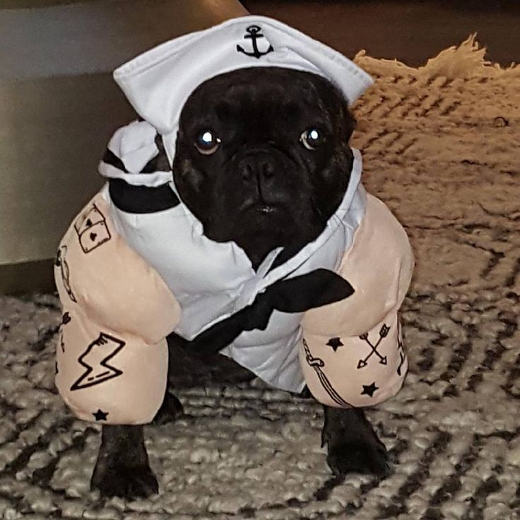 Best 25+ Popeye costume ideas on Pinterest | Popeye ...