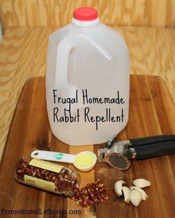 Easy homemade rabbit repellentDIY Rabbit Repellent Recipe  Items needed:      empty milk jug, water     5 garlic cloves     1 teaspoon crushed red peppers     1-gallon water     1 tablespoon dish soap  Directions:      To make the repellent fill an old milk jug with water, add 5 crushed garlic cloves, a teaspoon of crushed red peppers (you can save a packet from the pizza delivery for this) and 1 tablespoon of dish soap.     Shake well; then let it sit in the sun for a day or two to make…