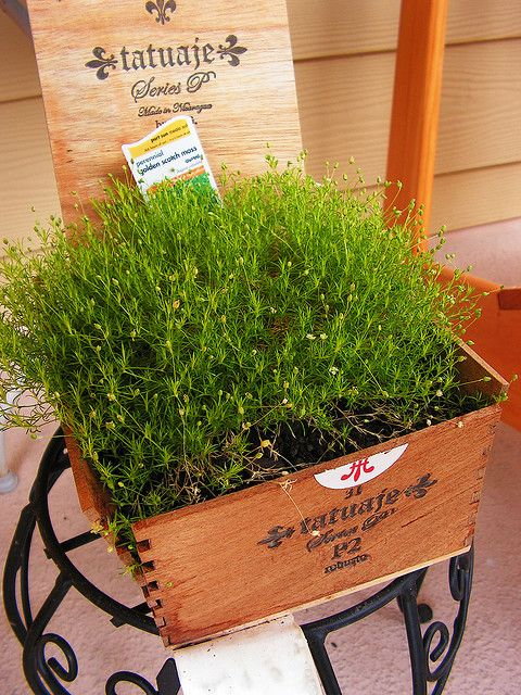 Cigar Box Planters- because Kaleb hoards these.....