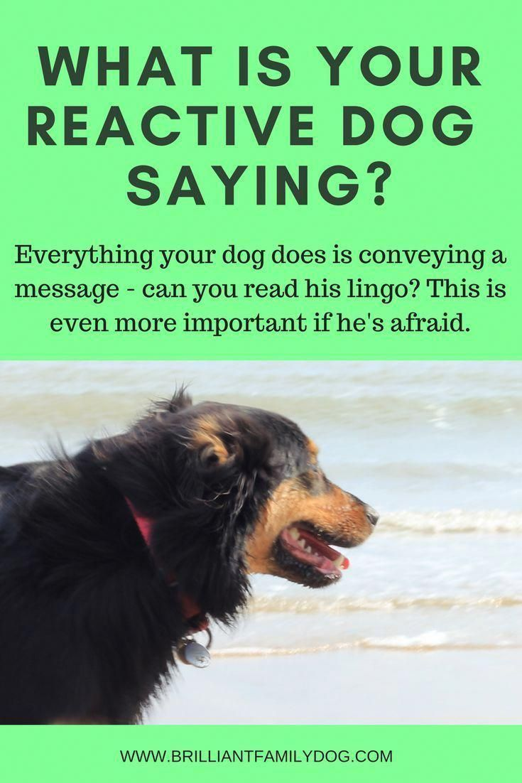 Fluent Delivered Dog Training Online Love Your Dogs Train Your