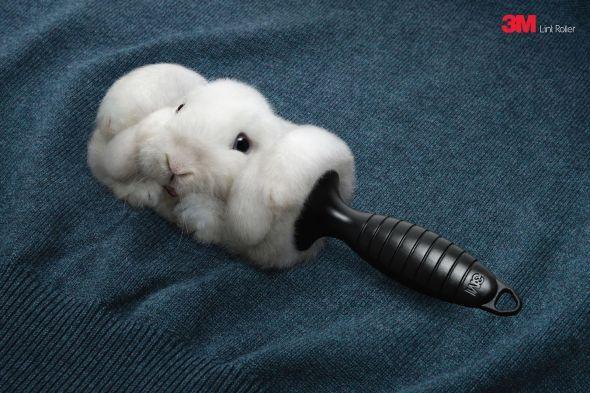 3M Lint Roller: Rabbit