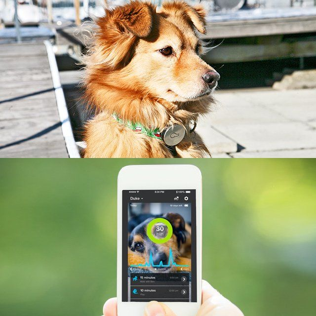 The Whistle Activity Monitor is an on-collar device that measures your dog's activities including walks, play, and rest, giving you a new perspective on day-to-day behavior and long-term health trends. Check-in from your phone, share memorable moments with family and friends, and make informed decisions with your vet. Measurement: Walk - Whether a trip around the block or a weekend hike, Whistle measures your dog's walks throughout the day. Play - See when your dog is chasing a ball, jumping…