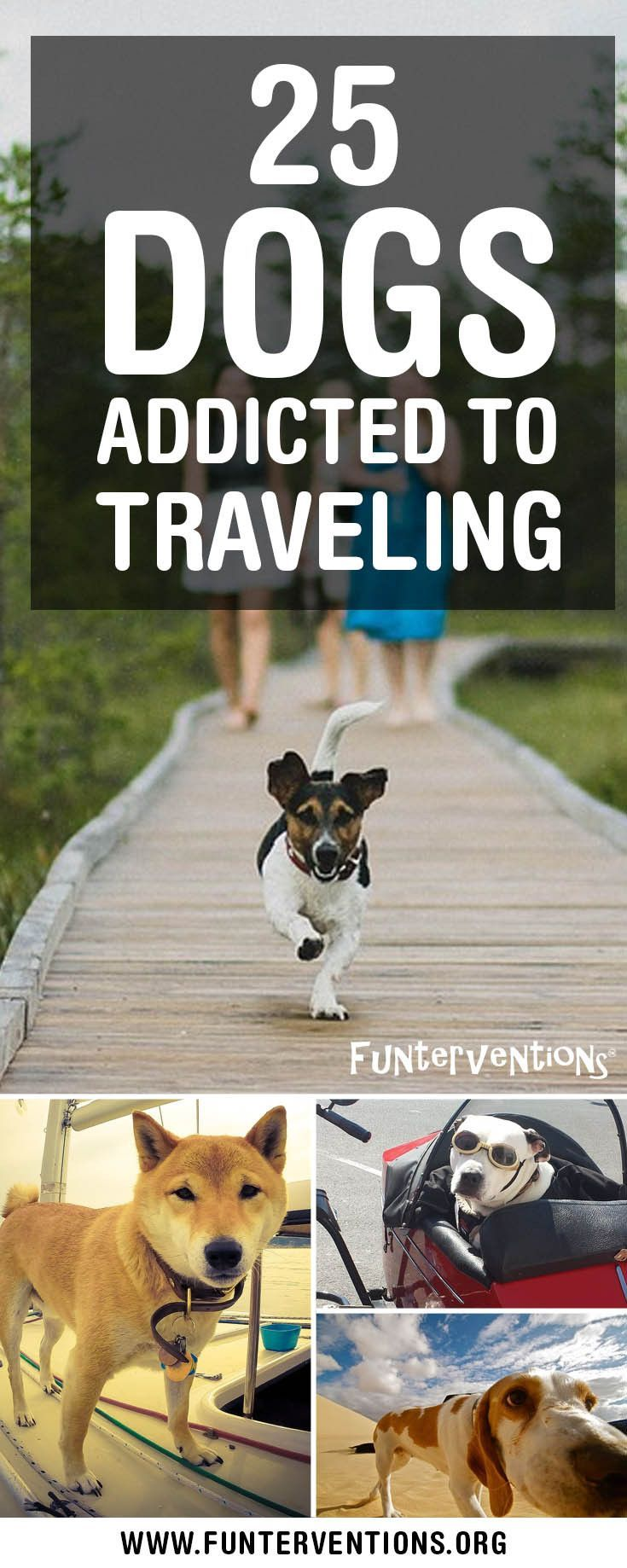 Sometimes being a Crazy Dog Owner and taking your dog with you everywhere you go can be a good thing, especially when it involves traveling the world together. And as it turns out, they love to travel too. Here are 25 dogs who are addicted to travel as mu