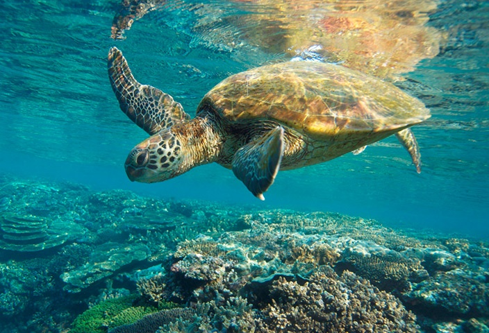 Quotes On Fringing Reefs: 50 Best Odd Animal Couples! Images On Pinterest