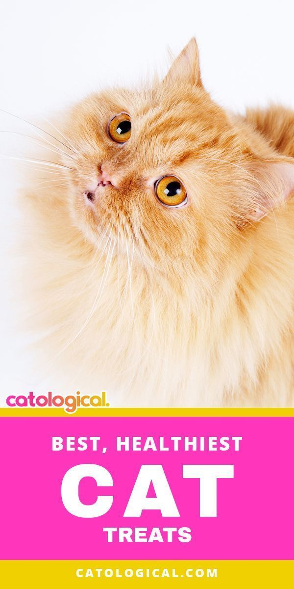 The Best Healthy Cat Treats For Training And Spoiling Cats Kittens With Images Healthy Cat Treats Cat Care Kitten Care