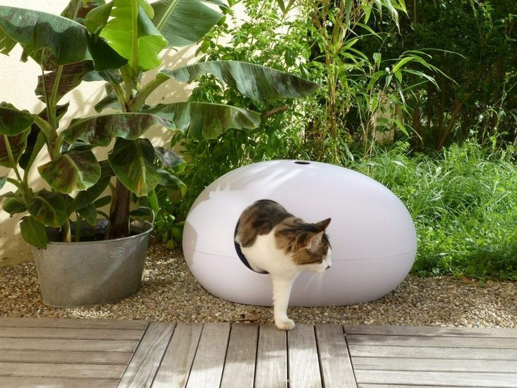 modern litter box. Too small to use as a litter box, but perfect for cave sleepers.