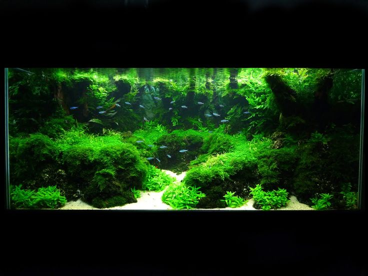 Paludariums And Planted Aquariums International