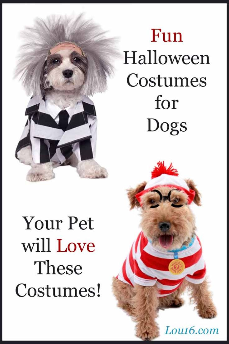Ready to Wear Halloween Costumes for Your Dog