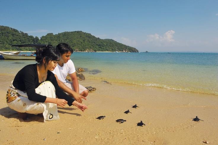 Turtle conservation at Perhentian Island, Terrengganu  #MalaysiaAus and #AirAsia