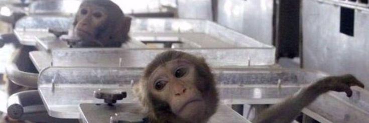 Video: Dit 3D geprint orgaan op een chip kan dierproeven vervangen