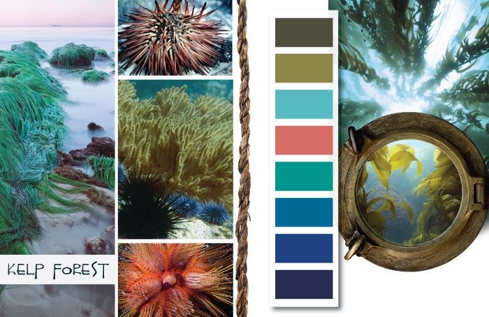 S/S 2014: Colors Palette, Summer 2014, Spring Summer, Colors Combinations, Blue Colors, Summer Colors, 2014 Inspiration, Kelp Forests, Colors Inspiration