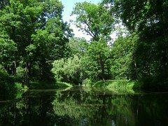 Varsavia, Polonia, Park, Foresta, Alberi