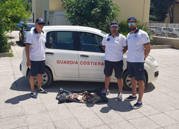 Gargano: controlli serrati della Guardia Costiera - https://blog.rodigarganico.info/2017/cronaca/gargano-controlli-serrati-della-guardia-costiera/