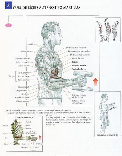 curl-biceps-alterno-tipo-martillo | por Deporte sin Quimica