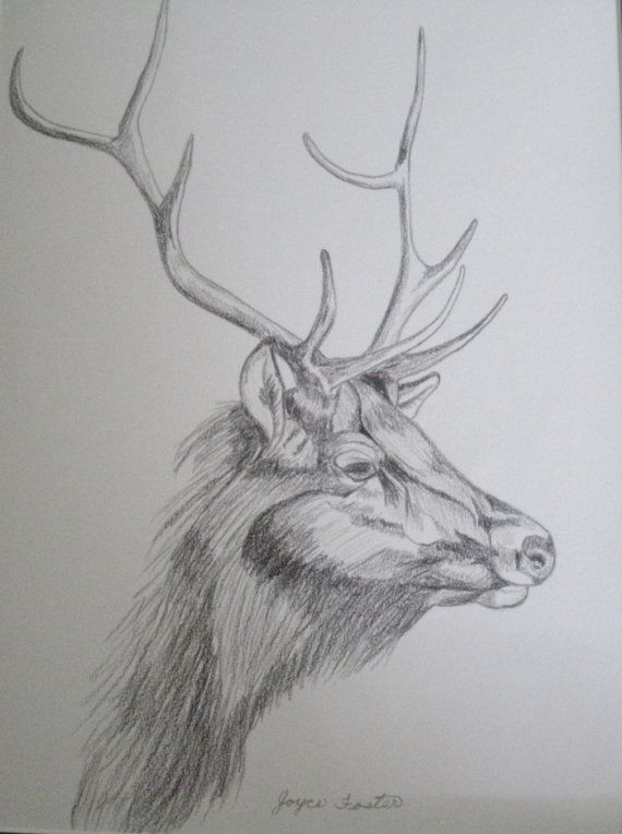 Drawing Animals In The Zoo With Images Elk Drawing Pencil