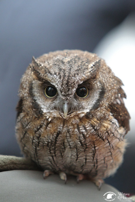Tiny owl-  i have one that is always outside my door looking in.