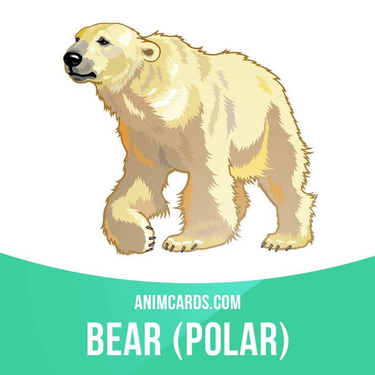 Although stereotyped as being voraciously aggressive, polar bears are normally…