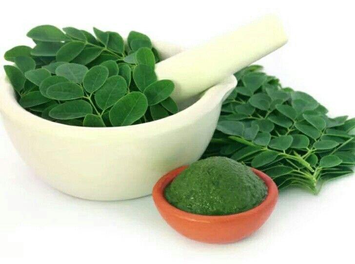 Moringa Planta energizante que nos ayuda en muchas dolencias incluso al Pancreas…