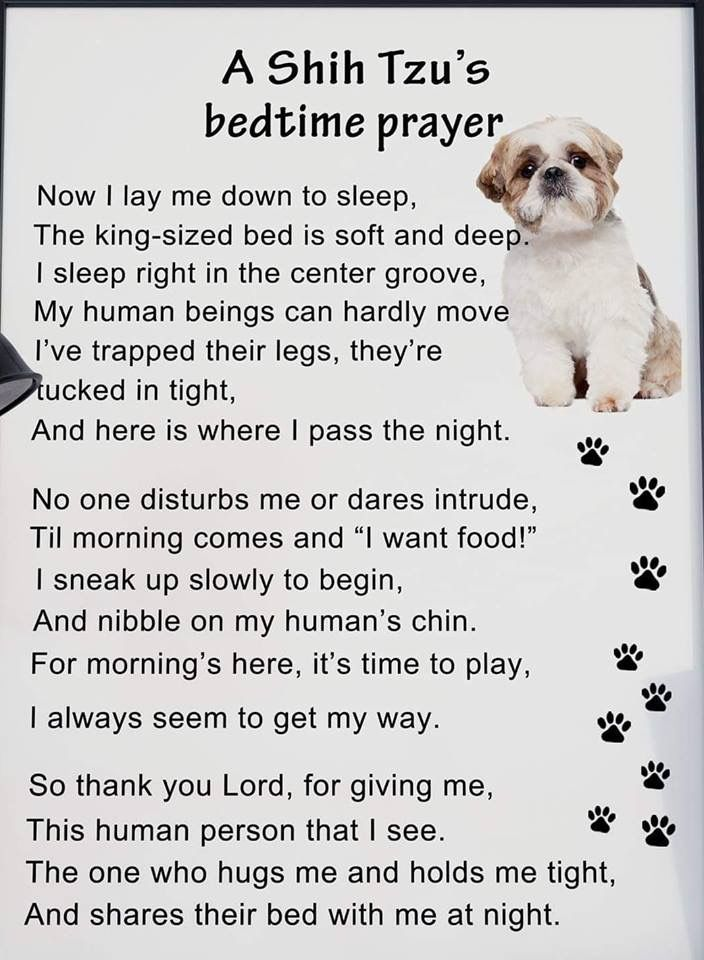 Pin By Pat Marvin On Shih Tzu Pugs Bedtime Prayer Shih Tzus