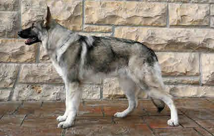 Charting the GSD Genome