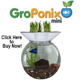 Natural aquaponic aquarium filters for your home aquarium!