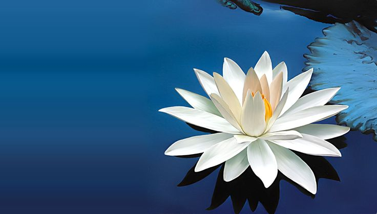 White Lotus Tarot - Intuitive Life Coaching for Personal Growth and Empowerment.