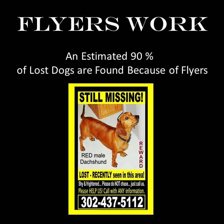 Best If You Find A Lost Dog Images On   Animal Rescue