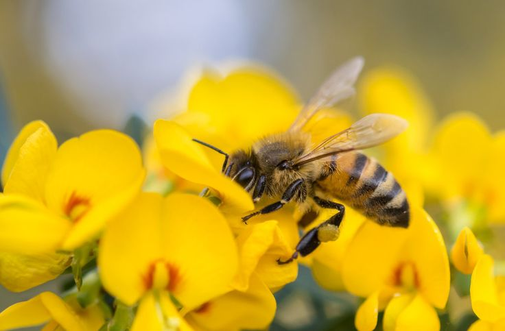 We could get a giant army of drone bees