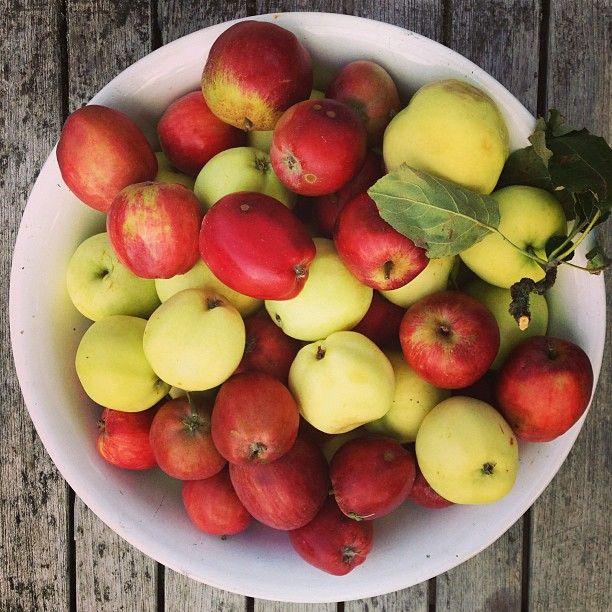Det bedste ved efterår: danske æbler