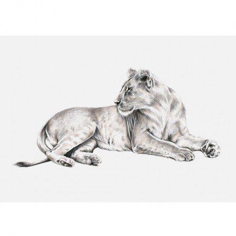 Feminam Panthera Leo Print