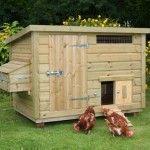 Zelf een kippenhok bouwen: stappenplan