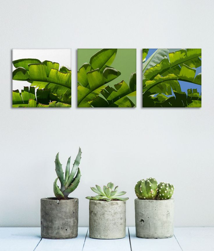 Banana Leaf Canvas, Set of 3 Prints, Tropical Wall Art, Tropical Decor, Green Wall Canvas, Banana Tree Art, Affordable Wall Art by Macrografiks on Etsy