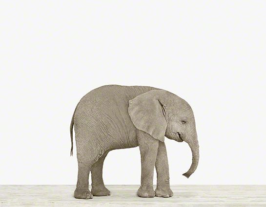 "Baby Elephant, by The Animal Print Shop. More elephants, this time a real, adorable one! I do generally prefer photographs over anything more abstract, and this print is pretty darn affordable at $25 for a 8.5"" x 11""."