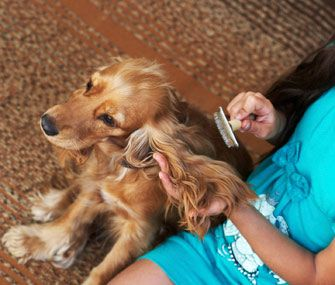 After spending a lifetime with animals, Dr. Marty Becker knows a thing or two about shedding. Here he shares strategies for reducing pet hair in your home.