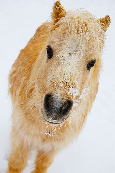 Wanna come play in the snow with me?: Funny Animals, Winter Pony, Horses Ponies, Cute Animals, Beauty, Affection Horses, Beautiful Creatures, Animals People