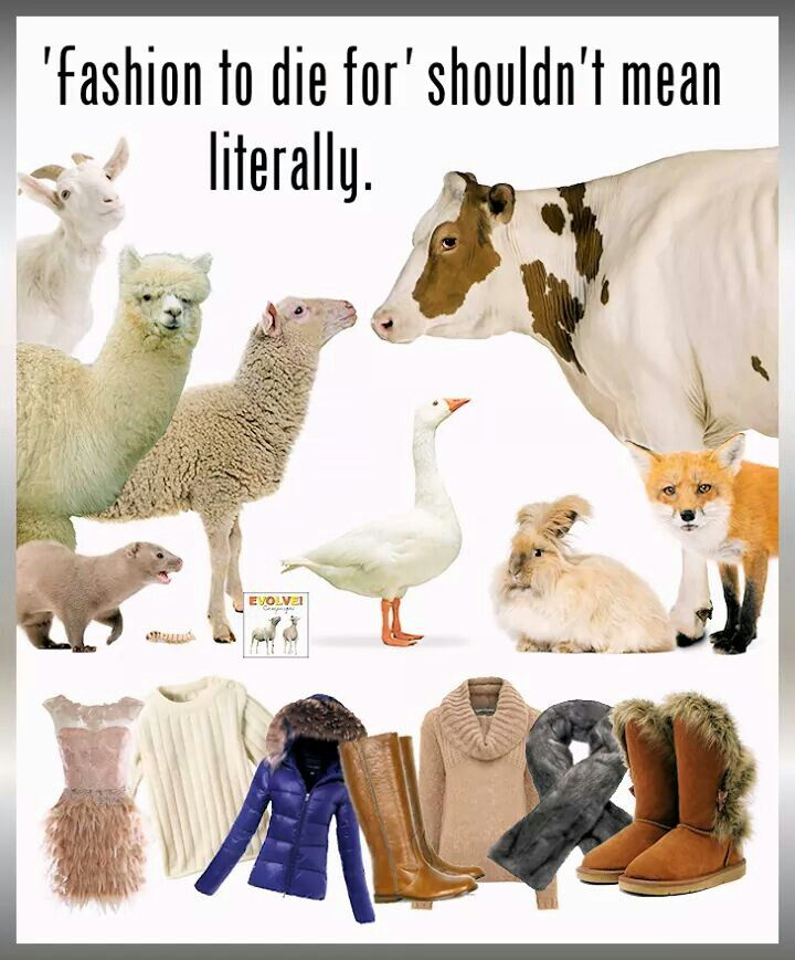 142 Best Fur Leather And Animal Skin Only Look Good On