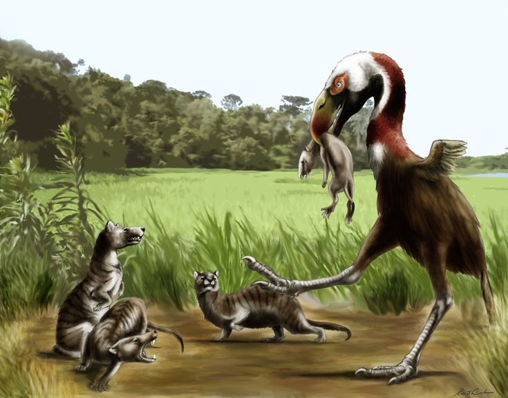 83 best cenozoicpaleocene images on pinterest mammals paleogene by rfcunha a group of borhyenid tries to steal the hunting a little ungulate of a phorusrhacid bird sciox Choice Image