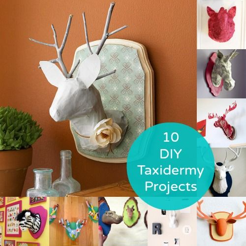 DIY Taxidermy - 10 Animal Heads to Make. If my husband gets to hang his deer head on the wall, I should get to hang a unicorn.