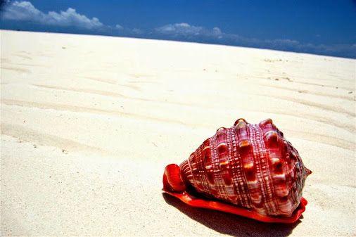 Фотография сделана на австралийском пляже Хаймс недалеко от городка Джервис Бэй.