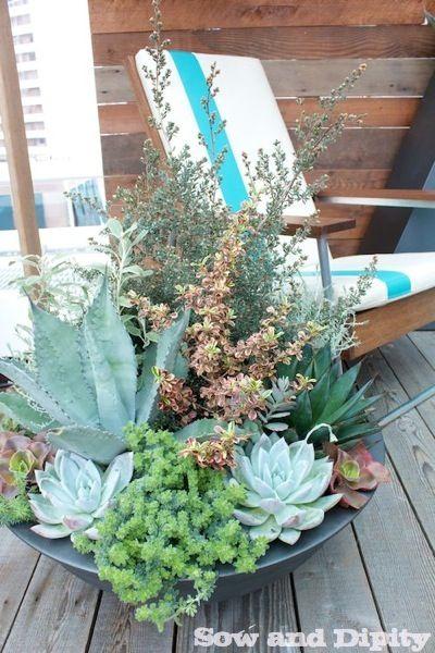 17 best ideas about dish garden on pinterest for Succulent dish garden designs