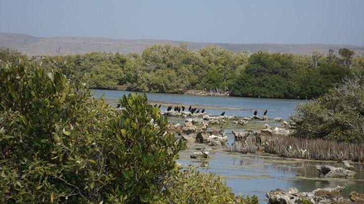 Bird Watching Mangrove Bay, Cape Range National Park