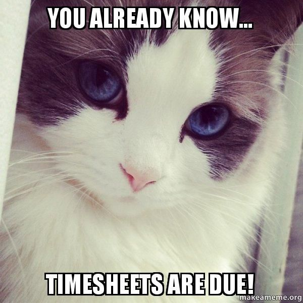 timesheets due - Google Search