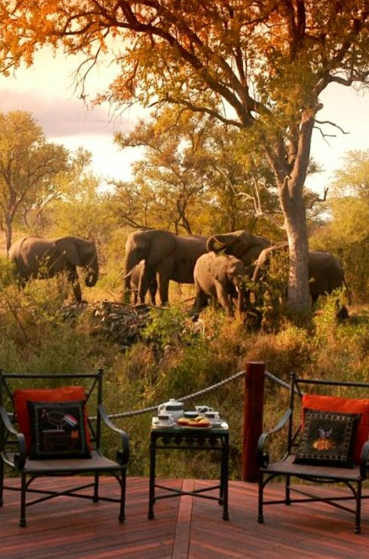 Elephant-side chat. Hoyo Hoyo Safari Lodge - Kruger National Park, South Africa:  #elephants