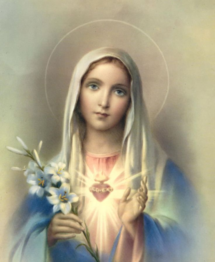 Resultado de imagen de lirio virgen maria