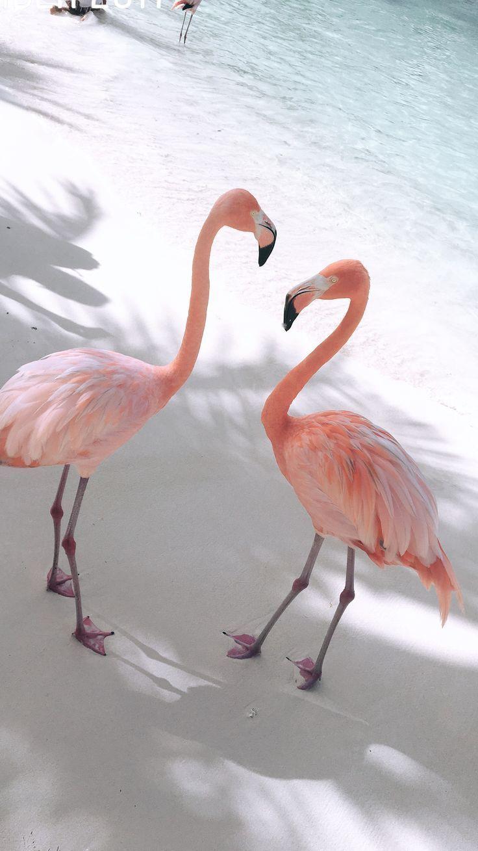 #nature #aves #flamingos – #aves #flamingos #nature #planodefundo