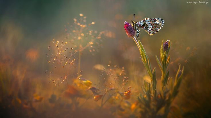 Motyl, Kwiat, Roślinki, Światło