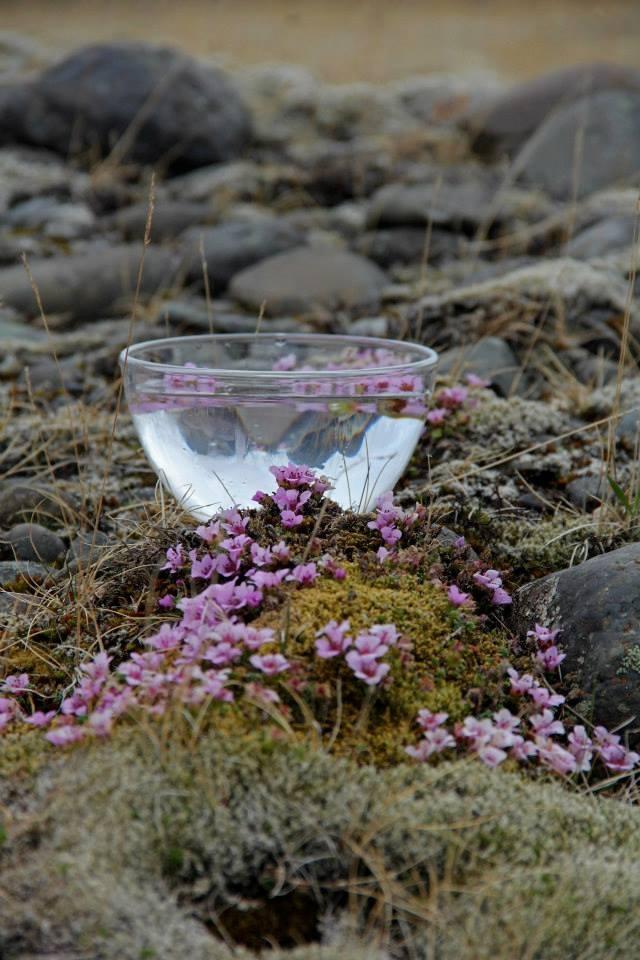 Blómadropar - Flower essences