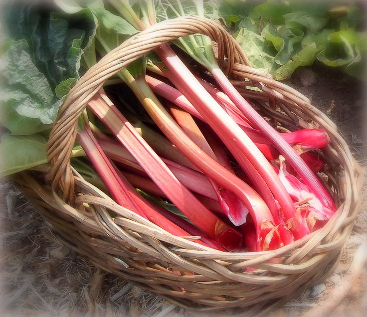 Best rhubarb recipes, rhubarb jam, rhubarb soup, rhubarb muffins, and more. Rhubarb trivia from The Old Farmer's Almanac.