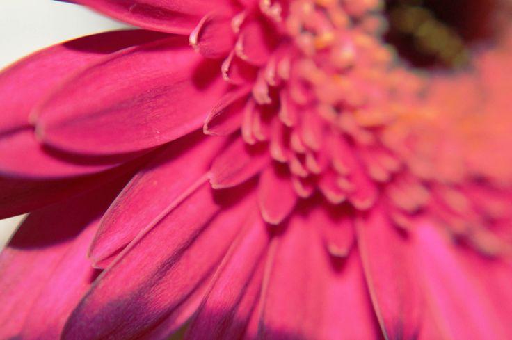 #flower close up