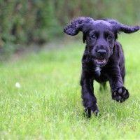 #dogalize Cuidados de las orejas de tu perro: recomendaciones #dogs #cats #pets